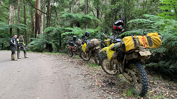 Three dirt bikes on a Mile Munchin Adventures Great Otway Tour.